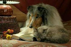 Dog. Cat. Book. Heaven.