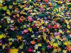 Høst i Slottsparken 2013