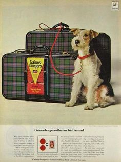 Vintage ad featuring wire fox terrier