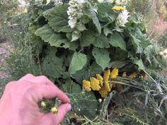 Davis Bee Sanctuary Permaculture Tour - http://permaculturehq.net/davis-bee-sanctuary-permaculture-tour/
