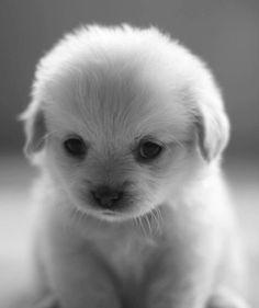 i love little white dogs