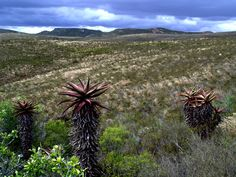 Recognizing the Renosterveld