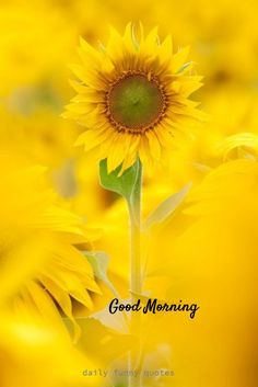 Are you searching for ideas for good morning handsome?Check this out for cool good morning handsome ideas. These amuzing quotes will brighten your day. Good Morning For Him, Good Morning Handsome, Good Morning Funny, Good Morning Coffee, Good Morning Greetings, Best Good Morning Wishes, Positive Good Morning Quotes, Good Morning Happy Sunday, Morning Thoughts
