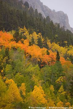 Monarch Pass is considered by many to be the most scenic route through Colorado.