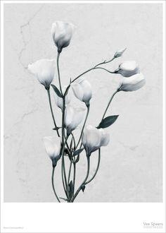Vee Speers Botanica