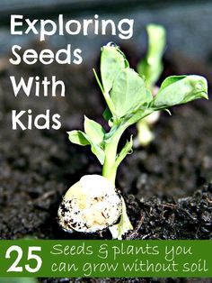 Exploring seeds with kids ... 25 seeds & plants you can grow without soil @Maaike Boven make lists ... #science #nature #play