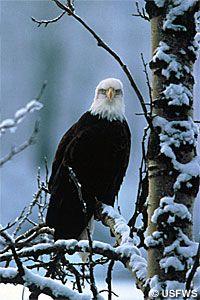 Bald Eagle Eagle Watch, Wolf Lodge, Image Database, Lake Park, Coeur D'alene, Bird Watching, Beautiful Creatures, Make Me Smile, Minnesota