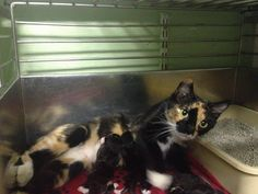 SHANDIE & 4 NEWBORNS HAVE BEEN RESCUED !! THE 1003RD, 1004TH, 1005TH, 1006TH & 1007TH CATS RESCUED FROM CCAC IN 2015  31 AUG @1PM ET - PULLED FOR RESCUE BY CAT ADOPTION TEAM, WILMINGTON, FOR FOSTER CARE