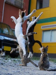 Cat Coreography You have to Win the rebound, to score a basket!