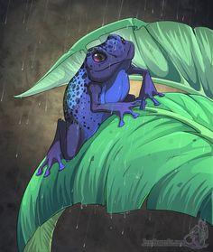 50 Best Poison Dart Frogs images  152df8dc493b