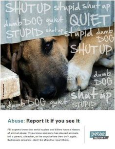 I can't accept as a dog owner that people can treat these inexaustable of sources of love with such abuse and hate.