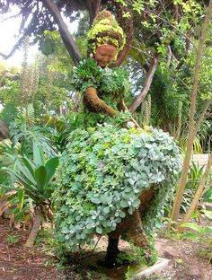 Dancing Topiaries at the San Diego Botanical Gardens