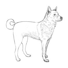 Simple Dog Outline | How to draw dog - Complete the drawing