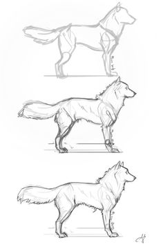 Fluffy Dog Step by Step by whisperpntr on DeviantArt