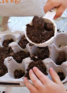 Use the left-over egg cartons from Easter to create a egg carton garden with your kids!