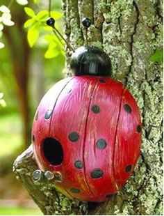 Recycled coconut shell into a creative birdhouse!