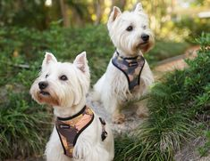 Reversible Dog Harness made by Pebblina. Cute Hexagon style pattern with matching collars and leads Teepee Tent, Dog Facts, Dog Harness, The Struts, Pattern Fashion, Making Out, Best Dogs, Bleach, Your Dog