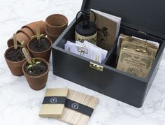 Object of Desire: The Mighty Seed Box by Franklyn & Vincent