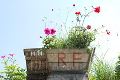 adore these vintage crates from @terrain ⋅- and this photo is amazingly beautiful!