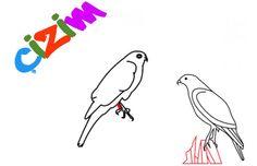 Kolay kuş resmi çizimi örnek modeller Şahin Çizimi resimleri adım adım basit resim kuş resimi çizimi şahin çizimleri örnek modeller resimler ile kolay çizim