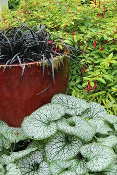 Suhr-Brown - contemporary - landscape - seattle - Bliss Garden Design