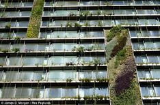 Unusual: The two dozen green wall panels that cover the building are as high as 16-storeys and hold over 100,000 plants