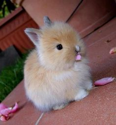 Rabbit , Cute Rabbit
