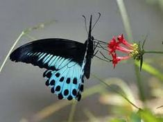 Image result for high fashion butterflies 2018