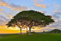 Trees In Hawaii Are Weird, Exotic And Awesome [PHOTOS]: