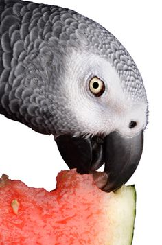 10 ways to get your Parrot to try new foods