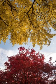 Breathtaking and Romantic Autumn Photography Make You Infatuated Purple Trees, Colorful Trees, Flower Pictures, Nature Pictures, Pictures Images, Autumn Photography, Amazing Photography, Creative Photography, Art Photography