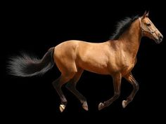 Here are the Top 10 Common Horse Breeds in world you dont know. They are probably the best horse breed around today. Common Horse Breeds, World Funny Videos, Horses, Bath, Toys, Amazing, Table, Youtube, Animals
