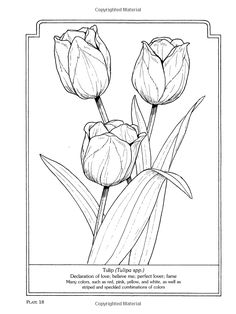 The Language Of Flowers Coloring Book Dover Nature John Green