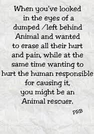 You have no ideal until you have looked into their eyes when they have been abused, beaten, and cast away.... and seemingly at times, it appears most humans don't care. After all, it's just an animal right? NO!!! That is not right. It is a living, breathing soul that WE are in charge of caring for