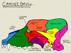 A place to find hints, tips and ask questions. : Basic Canine Skull… You (or at least i did) need...