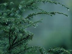 rainy_day_by_bodghia