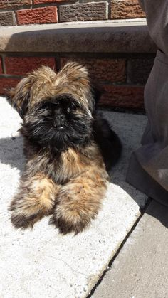Queens - Tori, a cuddly pooch with a teddy-bear face, slipped out of her Ozone Park home in October leading the Oviedo family on a desperate search. They found out a woman took a dog that looks exactly like Tori into the Petco in Howard Beach. They are hoping to find her.