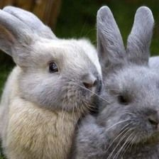 We are offering free rabbit health checks as part of national awareness week to educate the pet owning public about rabbit care and welfare.   The animal charity will be at Burrowmoor Primary School in Burrowmoor Road, March on May 7   Owners can bring their rabbits for a free health check including nail clipping, fur & teeth checks & support on behaviour, accommodation & companionship.   Appointments available between 3.30pm & 5.30pm. To book call 0844 248 8181 or email…