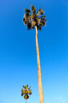 Iconic palm trees stand tall in the Carclew gardens