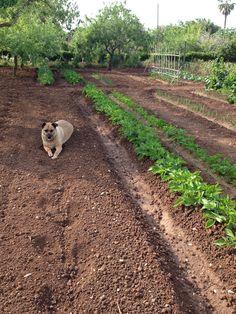 Il guardiano dell'orto