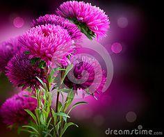 Aster Flowers Art Design
