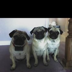 Left to Right: Baxter, Maxx, and Sadie
