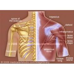 How to Get Upper Back and Neck Pain Relief by Stretching the Trapezius Muscle