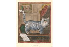 Angora Cat   When the Woof Pack Purrs   One Kings Lane