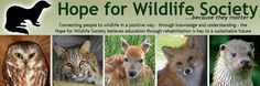 Hope for Wildlife is Nova Scotia's only wildlife rehab centre. This site is great for learning what to do when you find an orphaned or injured wild animal, or checking out their TV documentary.