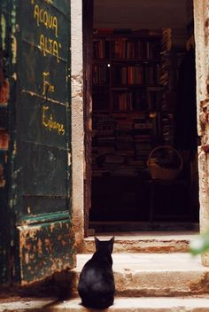 Cats love bookshops.@ Libreria Acqua Alta, Venice