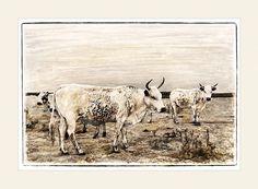 Nguni cattle - Nguni Ancestors - Marlene Neumann Fine Art Photography  www.marleneneumann.com  neumann@worldonline.co.za