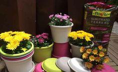 Pack 2 testos de colors amb plat + 2 plantes tipus margarita + sac de sustrat universal per 15,95€