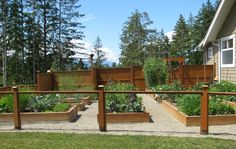 love this vegetable garden!