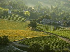 L'Armagnac Wine tourism